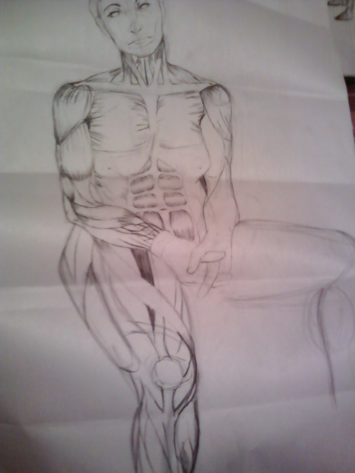 Anatomy Drawing of a Woman (Muscles) 1 by Quazu on DeviantArt