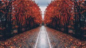 Autumn Street - HD Wallpaper