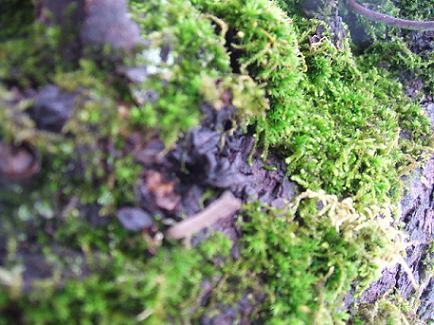 Fungi by REPTARRYAN001