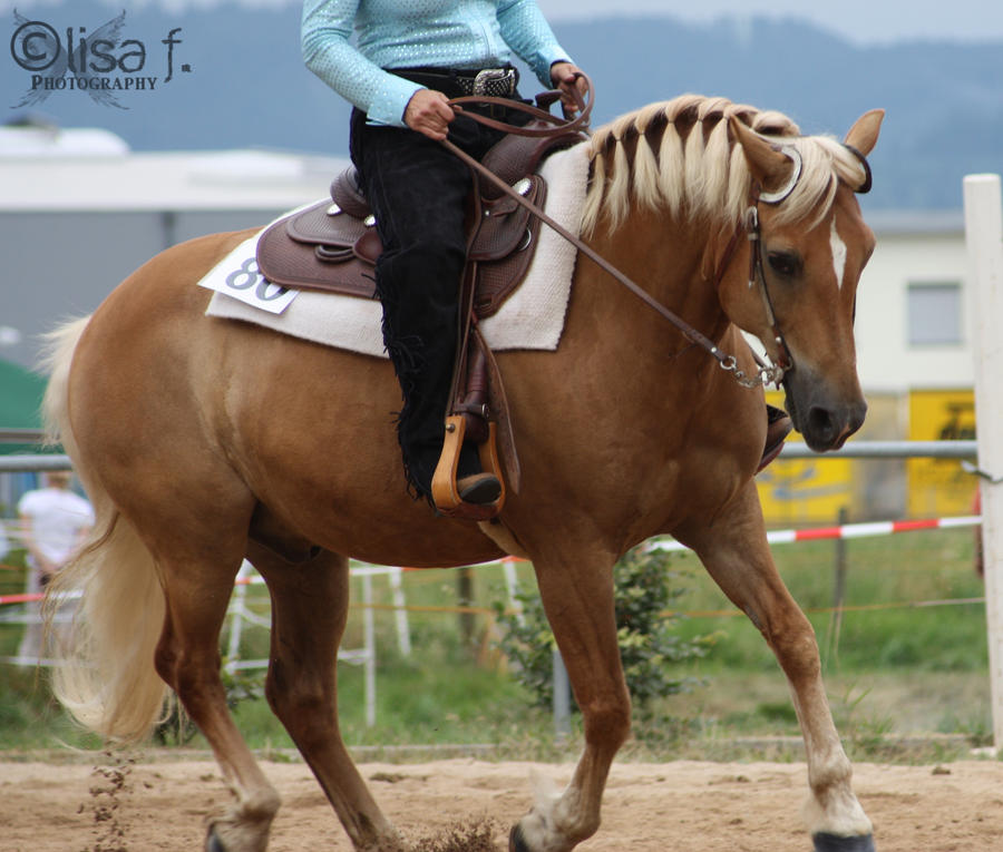 Western Horses Pictures Western Horse ii by