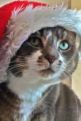 What Christmas AGAIN? FFS!