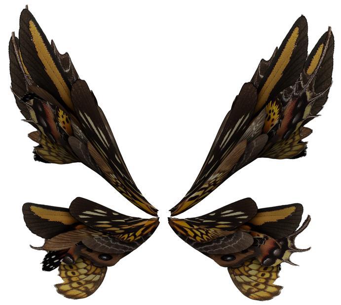 Wings 32