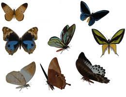 butterflies by stock-cmoura