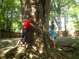 Around the Tree by Pascalou