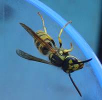 Bee? by Pascalou