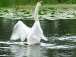 Swan by Pandoras-Encore