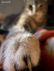 Kitty 2 by ilyana8
