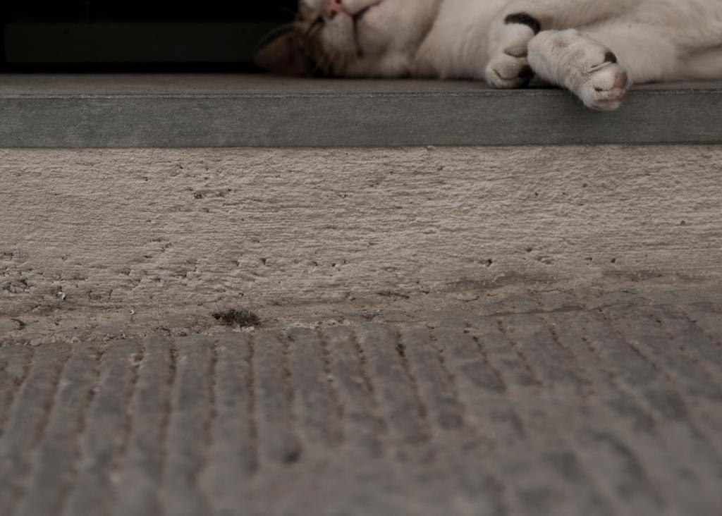 Sidewalk dreaming by Joosiee