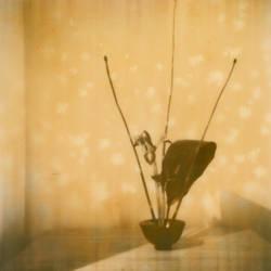 Ikebana with Cherry Blossoms by arbitrarynamechange