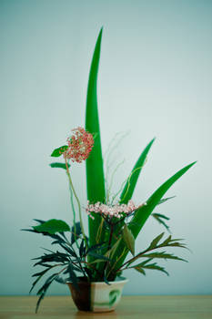 Ikebana with Elder and Rushes