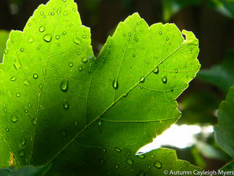 Fresh Raindrops by AutumnCayleigh