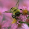 Bumblebee by sagira87