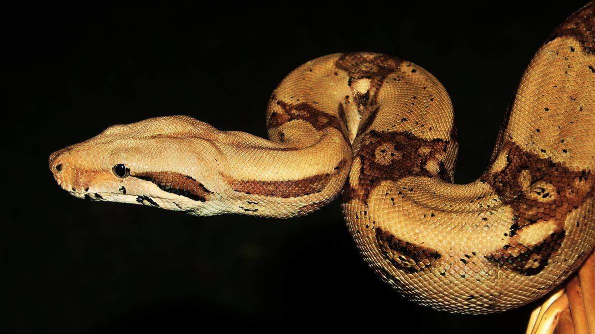 snake wallpaper by blackasmodeus