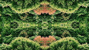 forest pattern by blackasmodeus