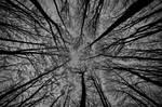 Trees of Romania