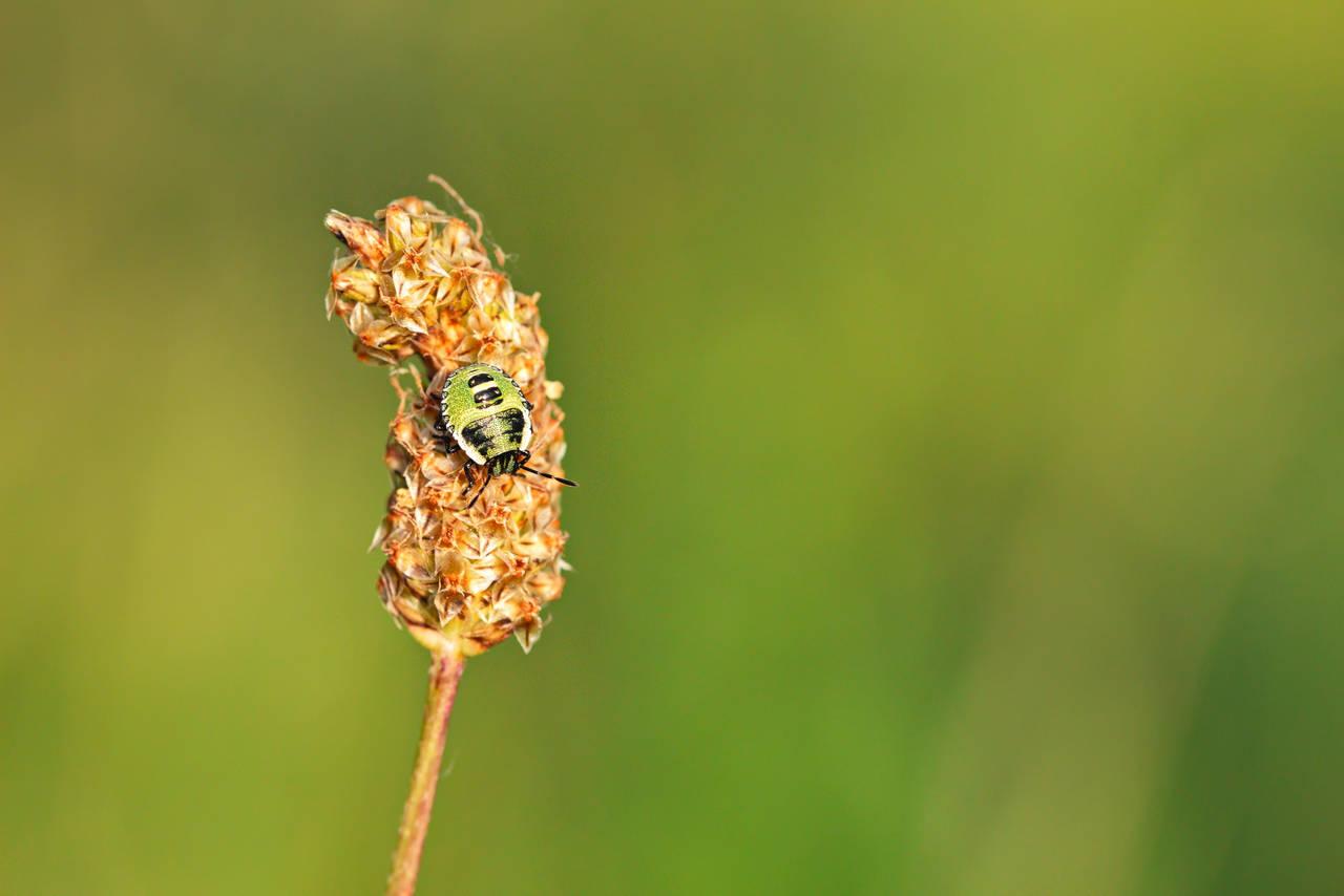 green bug by blackasmodeus