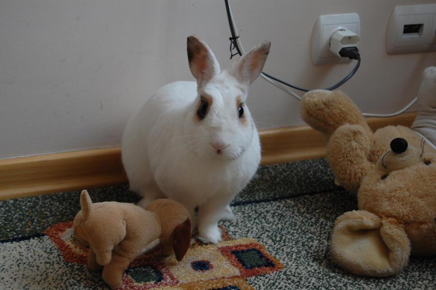 White rabbit by Larienne007