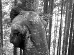 woodman by duckstance