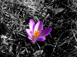 violett by duckstance