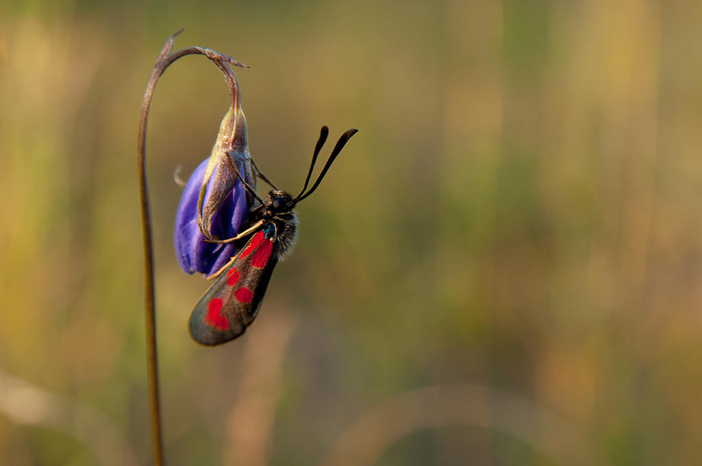 red purple by duckstance