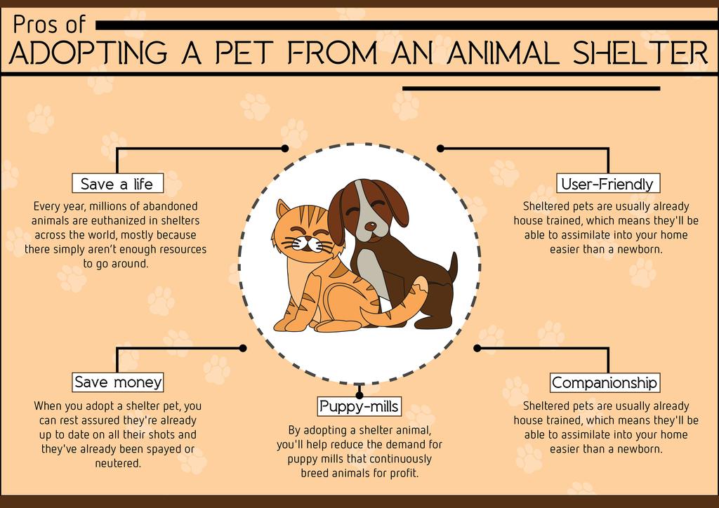 Top Reasons to Adopt a Pet