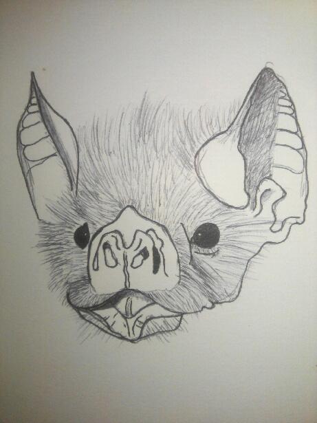 Bat by DragonbornCN