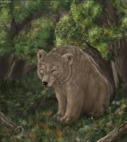 Bear by FlashW