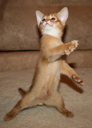 Playfull kitten by FlashW
