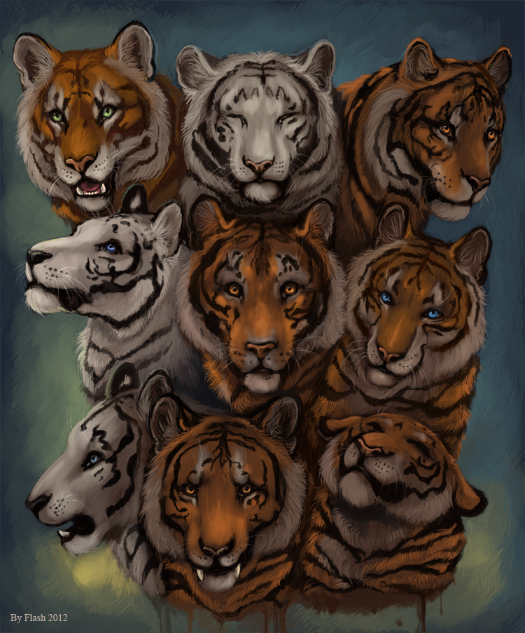 Tiger-tiger by FlashW