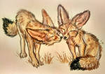 Fennec foxes by FlashW