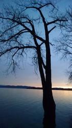 Endless Tree