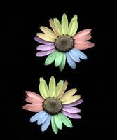 Flowers by leblondi