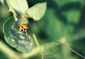 Ladybug II by leblondi