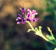 Beauty of nature by leblondi
