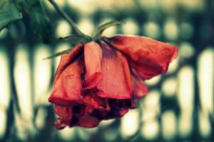 Love ended by leblondi