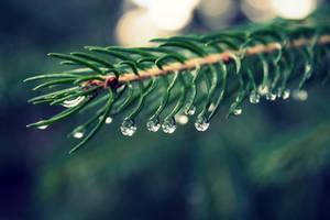 Rain rain by leblondi