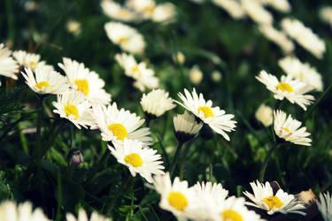 Miss Daisy by leblondi