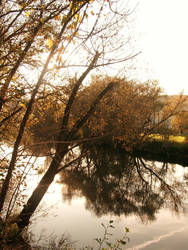 Sunny nature by leblondi