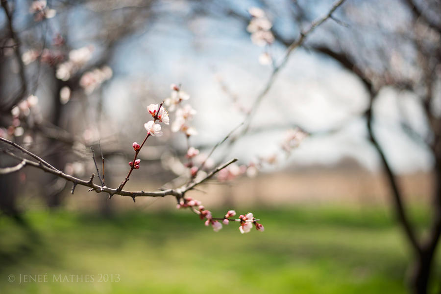 Hello, Spring by *JeneeMathes