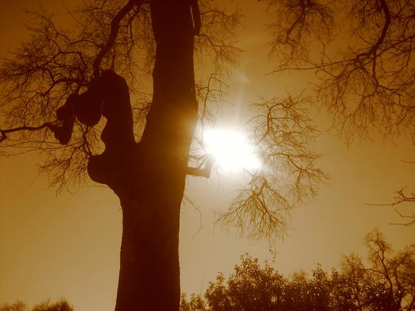 anamated sun