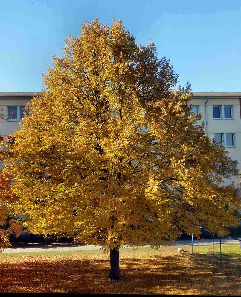 sagt man deswegen Goldener Herbst by GRANA53