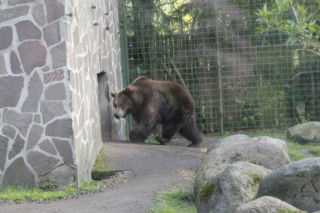 Grizzly by GRANA53