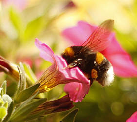 Bumblebee Breakfast