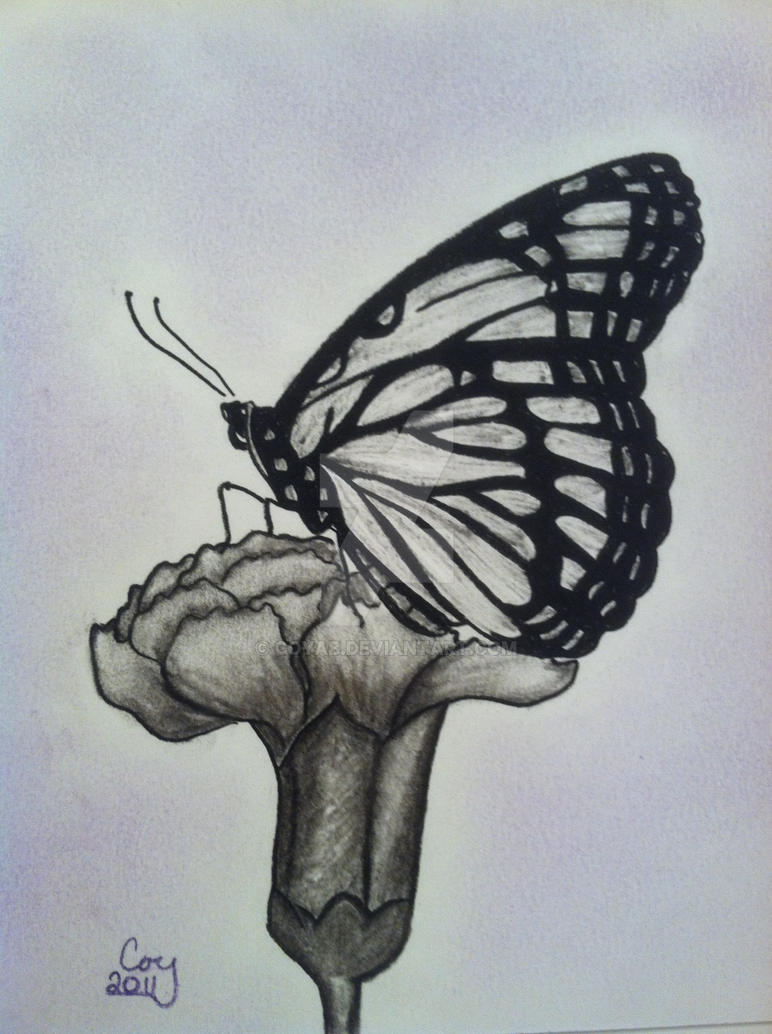 Butterfly And Flower Charcoal drawing by CoyAB on DeviantArt