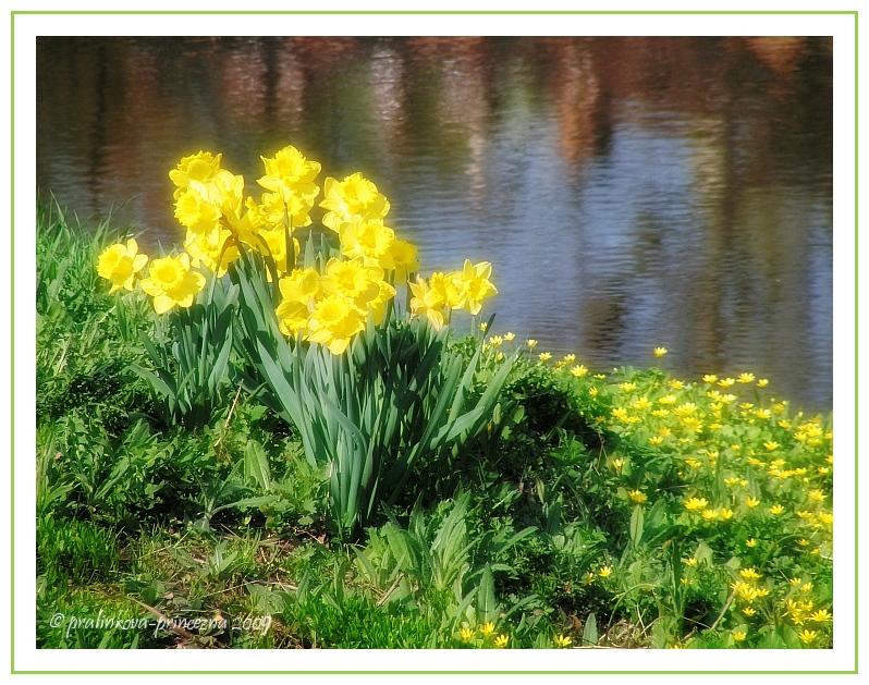 Spring glows in gold by pralinkova-princezna