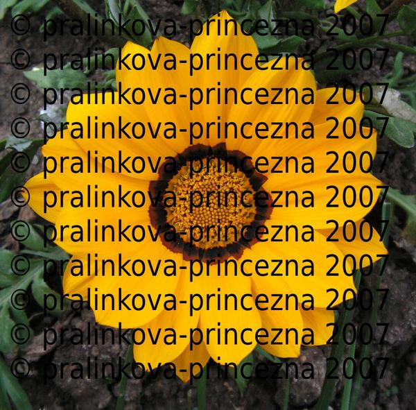 Stock9 - Yellow flower by pralinkova-princezna