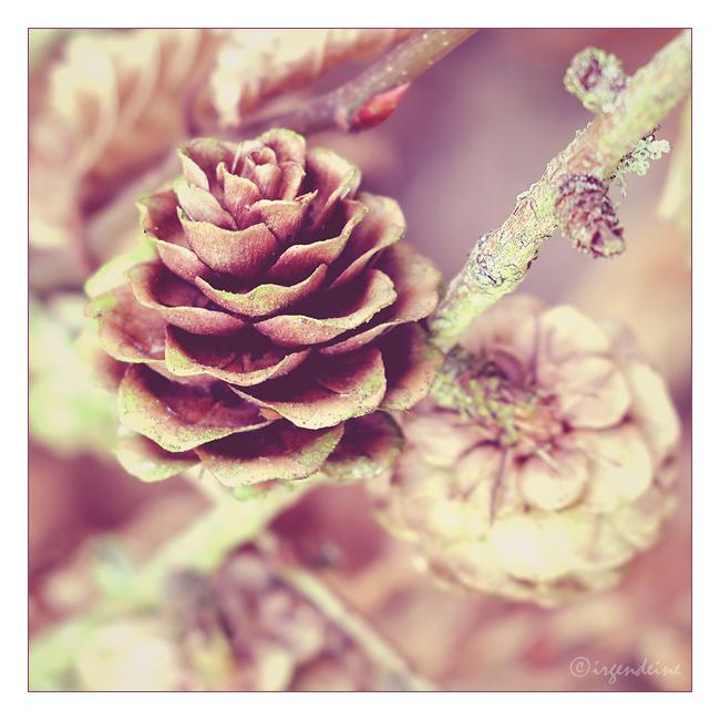 Wooden rose by irgendeine