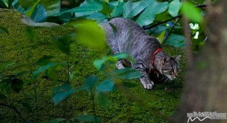 Cat Ready To Strike by oogabear