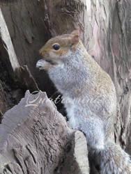 Squirrel by Quatromini