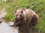 Lazy Bear VII